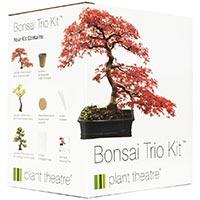 kit coltivazione bonsai