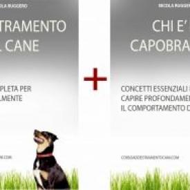 Corso per addestramento cani