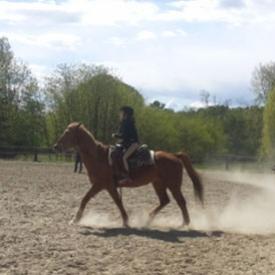 Corso di equitazione