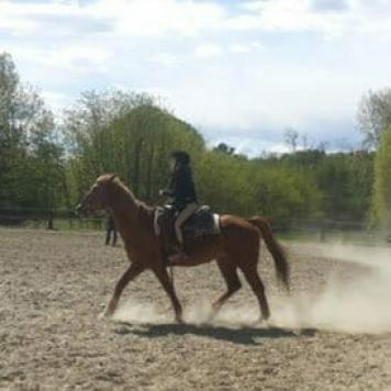 corso di equitazione varese