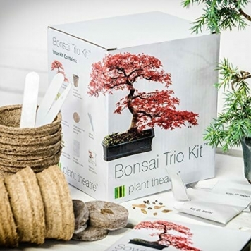 kit per bonsai regalimania.it