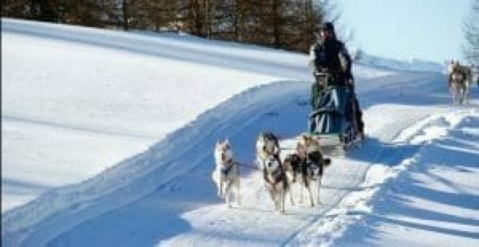 esperinza regalo sleddog, farsi trainare dai cani sulla neve